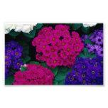 HYDRANGEAS DARK PINK PURPLES FLOWERS BEAUTY NATURE PHOTOGRAPH