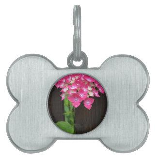 hydrangeas in bloom pet name tags