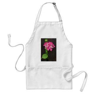 hydrangeas in bloom standard apron