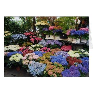 Hydrangeas, Paris Flower Market, France Card