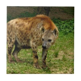 Hyena Prowl Tile