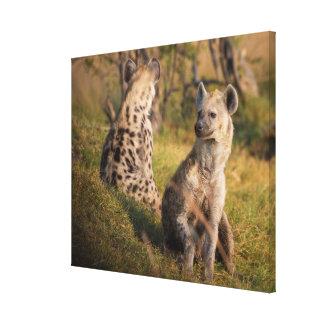 Hyenas Canvas Print