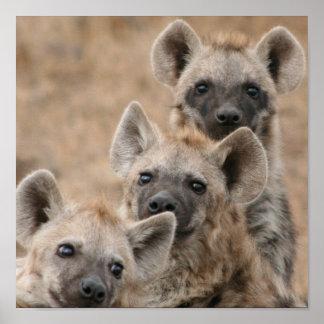 Hyenas Poster Print