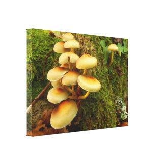 Hypholoma fasciculare Mushroom Canvas Print