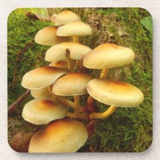 Hypholoma fasciculare Mushroom Plastic Coasters