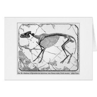 Hyracotherium venticolum art card