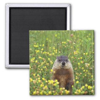 I am Groundhog Magnet