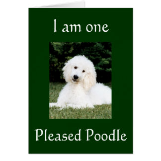 """I AM ONE PLEASED POODLE"" THANK YOU CARD"