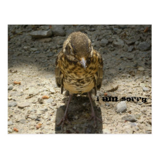 I am Sorry Wild Bird Gravel Postcard