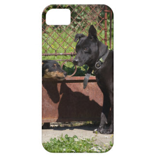 I am the boss iPhone 5 covers