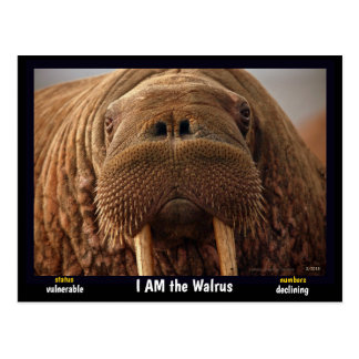 I am the Walrus, an endangered animal - Postcard