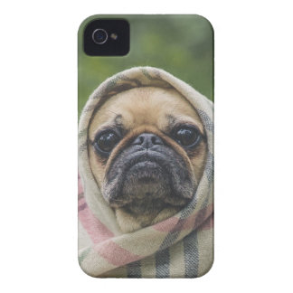 I Come in peace pug dog Case-Mate iPhone 4 Cases