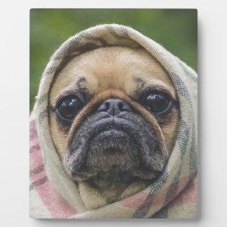 I Come in peace pug dog Plaque