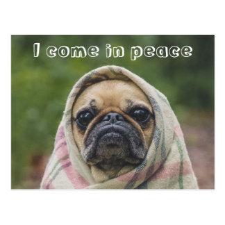 I Come in peace pug dog Postcard