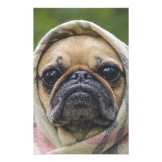 I Come in peace pug dog Stationery Paper