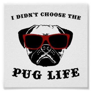 I Didn't Choose The Pug Life Cool Dog Poster