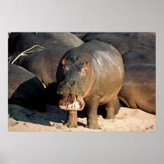 I Don't Want To Hippopotamus Portrait Poster