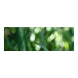 I dream of green photo print