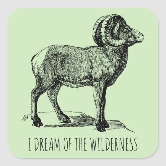 I Dream Of The Wilderness Big Horn Sheep Square Sticker
