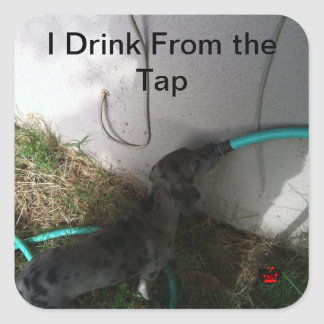 I Drink From the Tap Square Sticker