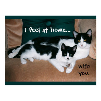 """I feel at home with you"" cats postcard"