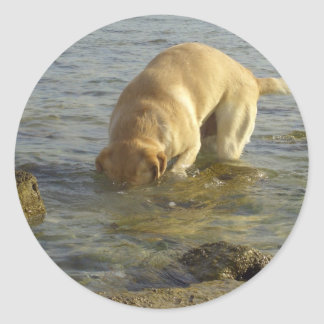 I hate Mondays - Labrador with head under water Classic Round Sticker