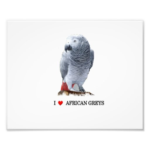 """I """"heart"""" African Grey Photographic Print"""