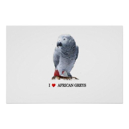 """I """"heart"""" African Grey Posters"""