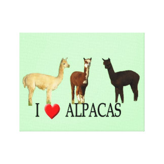 "I ""Heart"" Alpacas Gallery Wrapped Canvas"