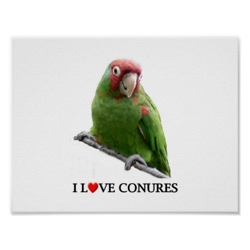 """I """"Heart"""" Conures Posters"""