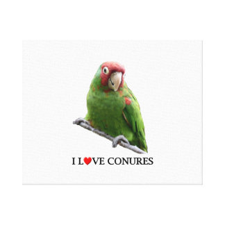 """I """"Heart"""" Conures Stretched Canvas Print"""