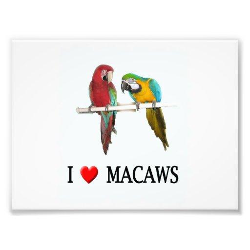 """I """"Heart Macaws Photo"""