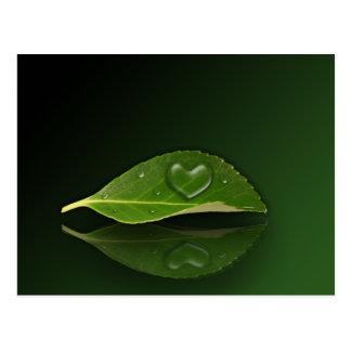 I heart Water Drops - Postcard