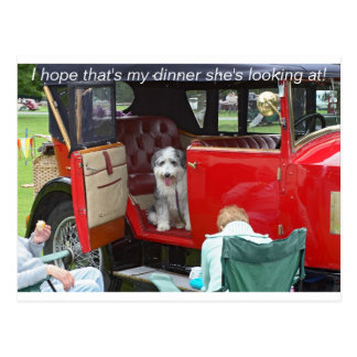 I hope that's my dinner she's looking... postcard