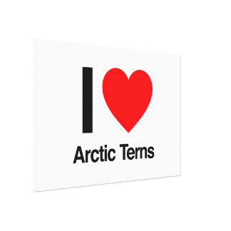 i love arctic terns gallery wrapped canvas