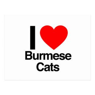 i love burmese cats postcard