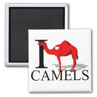 I Love Camels Magnets