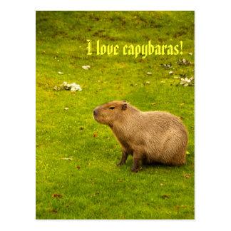I love capybaras Postcard