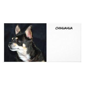 I Love Chihuahuas Personalized Photo Card