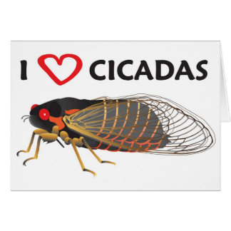 I Love Cicada Card