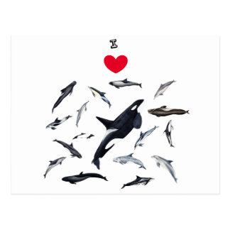 I love dolphins - Master the dolphins Postcard