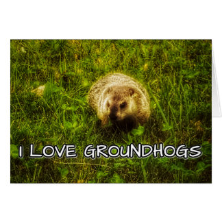 I love groundhogs greeting card