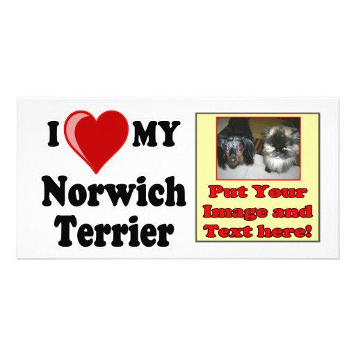 I Love (Heart) My Norwich Terrier Dog Customized Photo Card