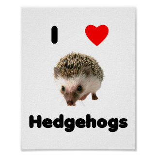 I love hedgehogs posters