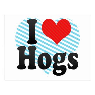 I Love Hogs Postcard
