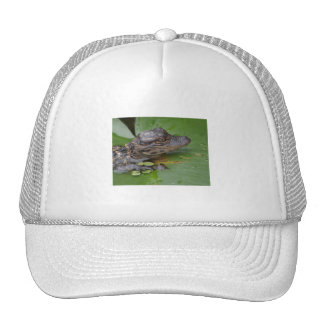 I Love Lilly Mesh Hat