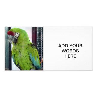 I love macaws! photo card