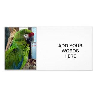 I love macaws! customized photo card