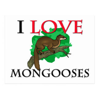 I Love Mongooses Postcard