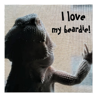 I love my beardie Fun Bearded Dragon Picture Poster